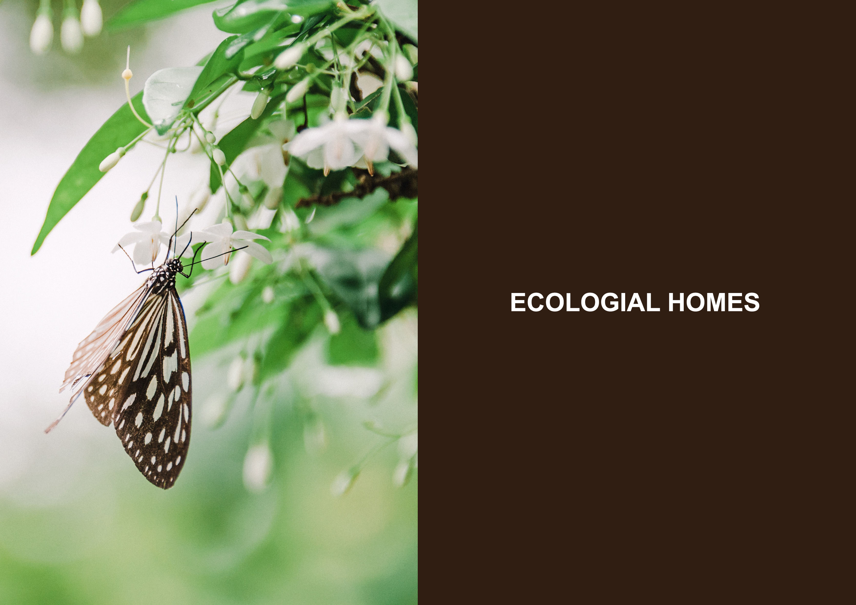 Ecological Homes